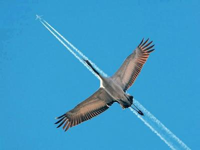 Gép-madár