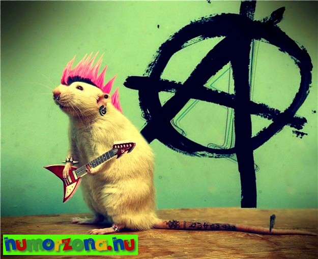 punkpatkány