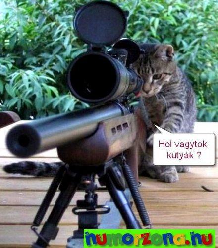 orvlövész cica