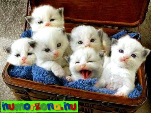 kiscisák