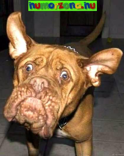 morcos,kutya