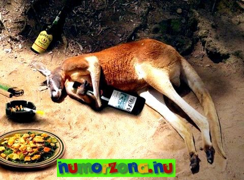 részeg kenguru