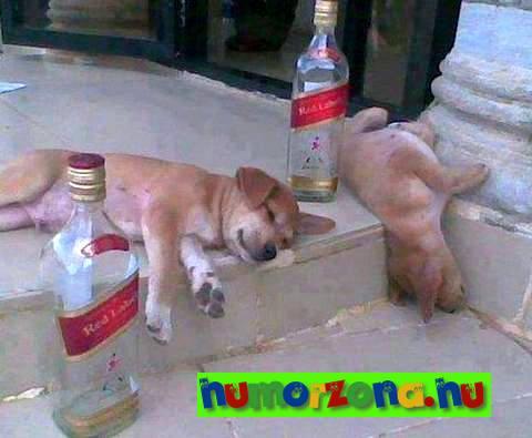 részeg kutyák