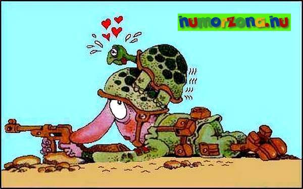 teknős szerelem