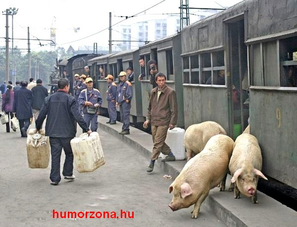 Passengers and Pigs detrain at Yue Jin 23/3/07