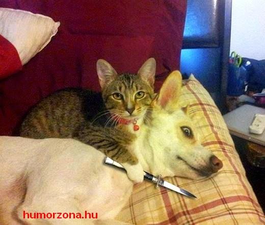 animals terror