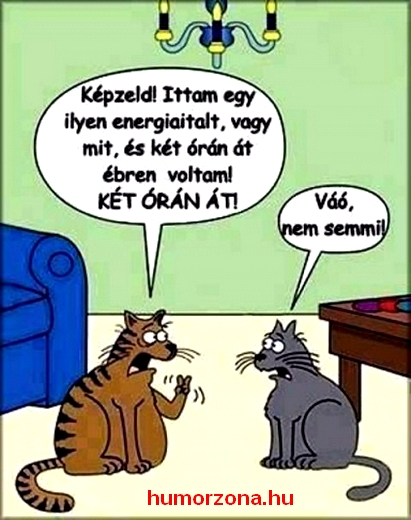 humorzona.hu-macskák