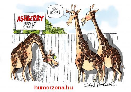 humorzona.hu-zsiraf