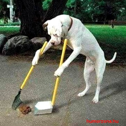 humorzona.hu-kutyakaki