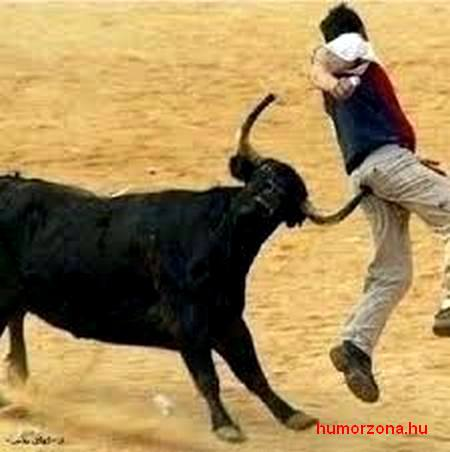 humorzona.hu-bull