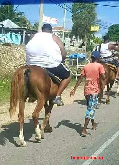 humorzona.hu-horse