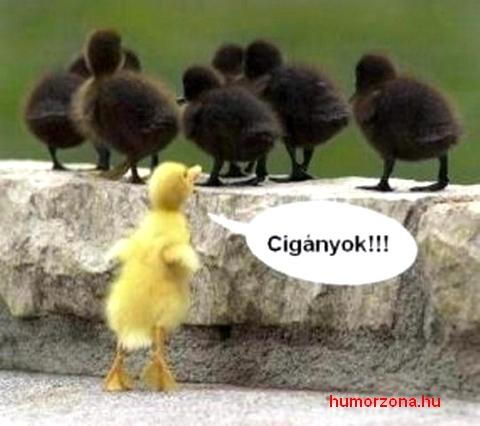 humorzona.hu-kacsa