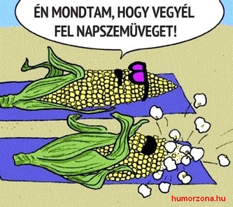 humorzona.hu-kukorica