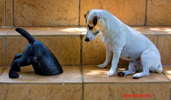 humorzona.hu-kutyák