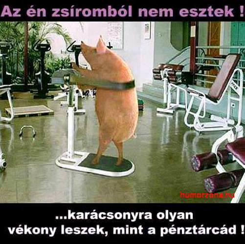 humorzona.hu-zsír