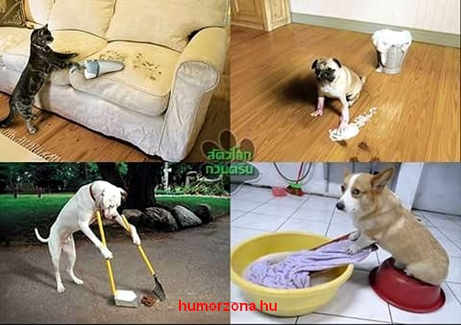 humorzona.hu-animals