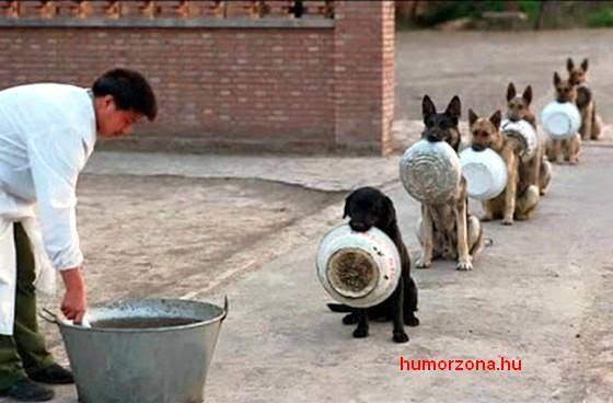 humorzona.hu-ingyenkaja